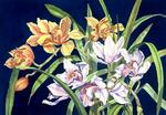 Lucy Arnold - orchidee in azzurro