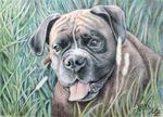Arts And Dogs - Pugile Yosi