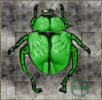 Abelard Ouvert La Nuit - The Green Beetle