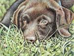 Arts And Dogs - Labrador Cucciolo